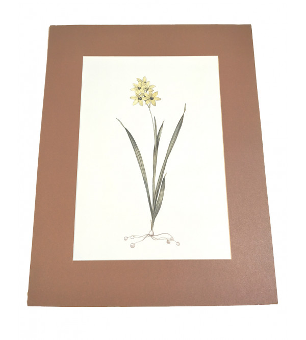 Flower painting on paper mounted 15x12inch