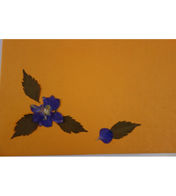 Gift Envelope 10 Pcs Set 3.5x7.5 Inch