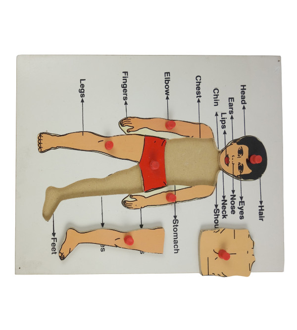 HANDICRAFT WOODEN EDUCATION TOY PART OF BODY