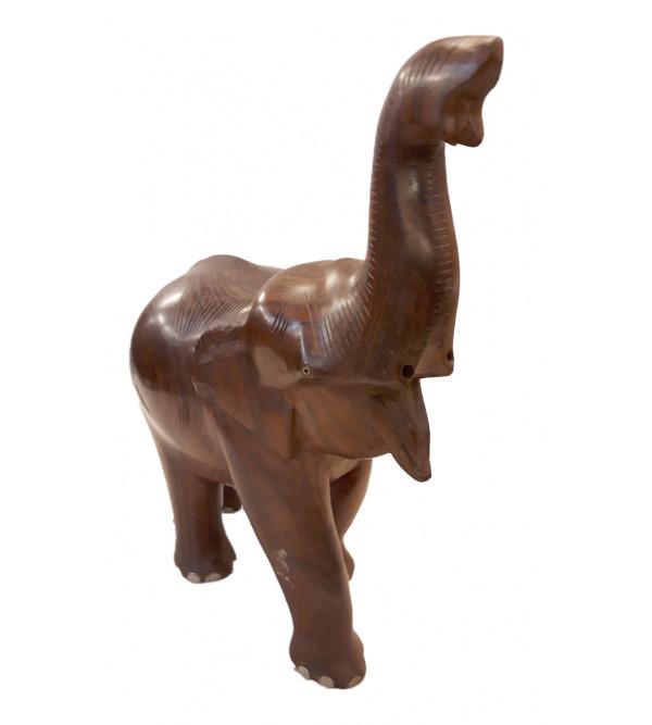ELEPHANT ROSE WOOD 12 IICH
